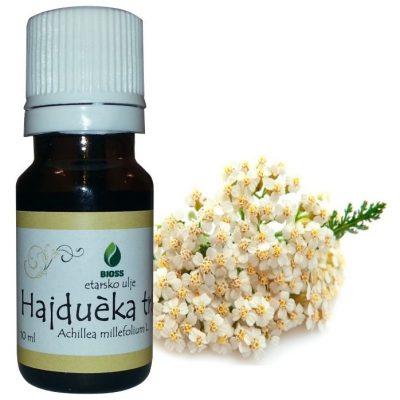 Etarsko ulje hajducka trava Achillea millefolium